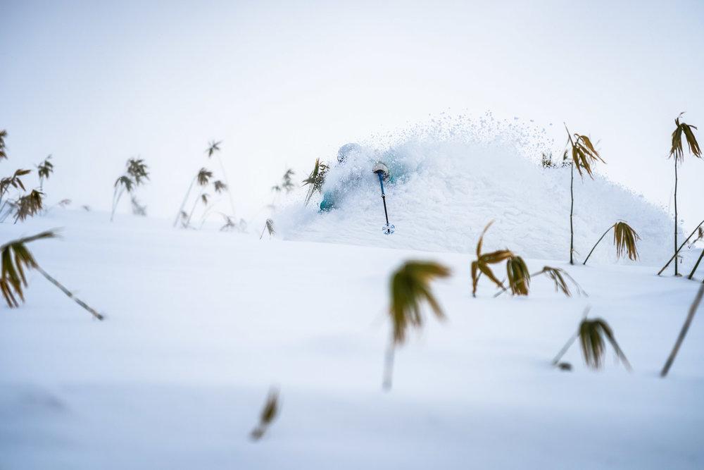 Early Season Snowlocals
