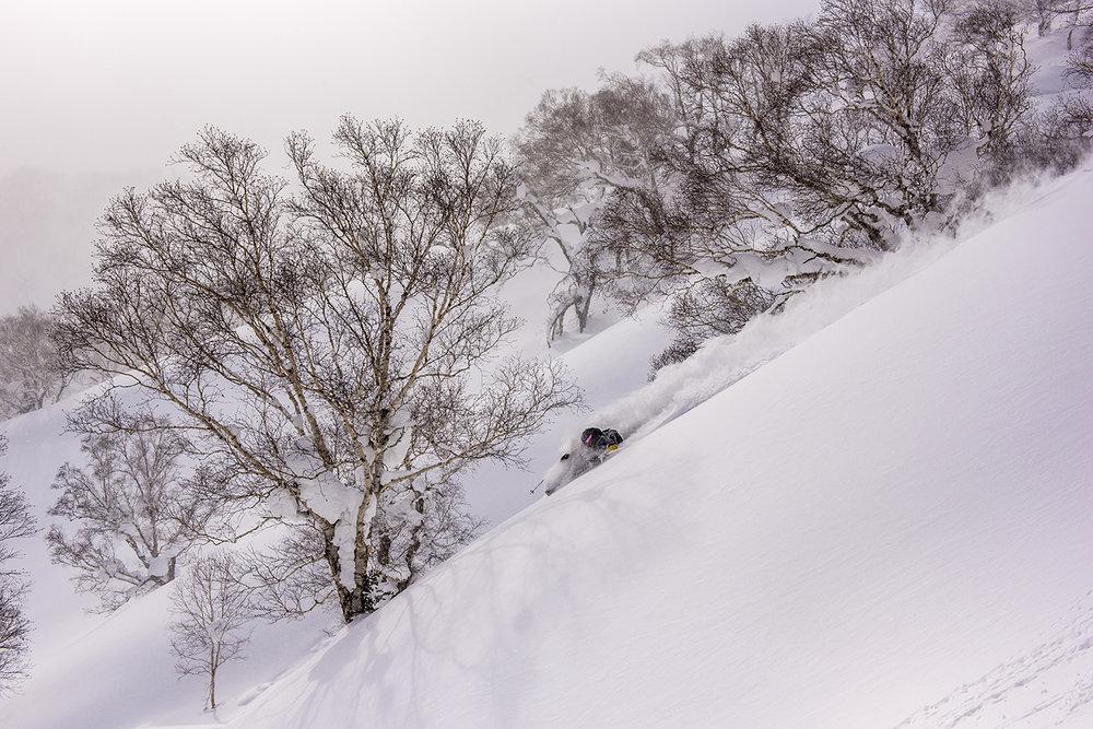 Niseko Guiding snowlocals
