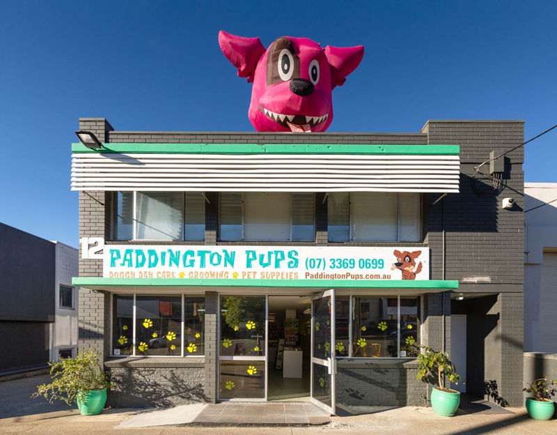 Paddington Pups.JPG