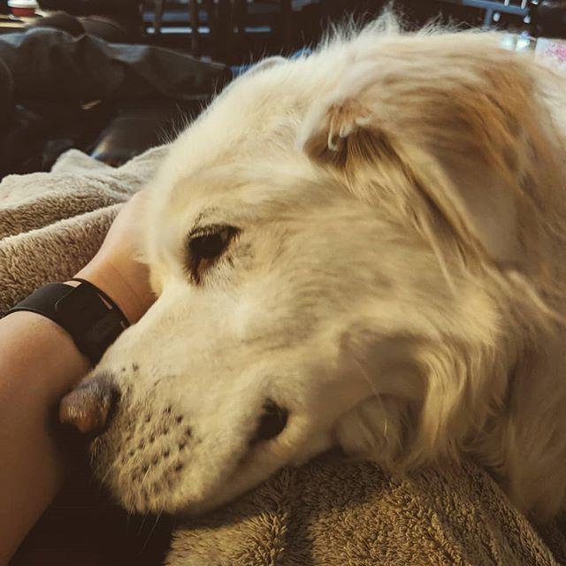 Cuddling? Or leaning into an ear scratch? Lol