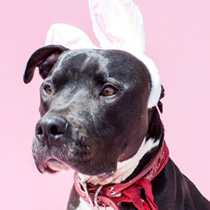 bark-williams-santa-monica-pet-portraits.jpg