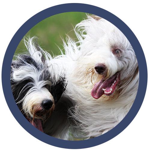 Full Service Grooming & Self-Serve Dog Wash