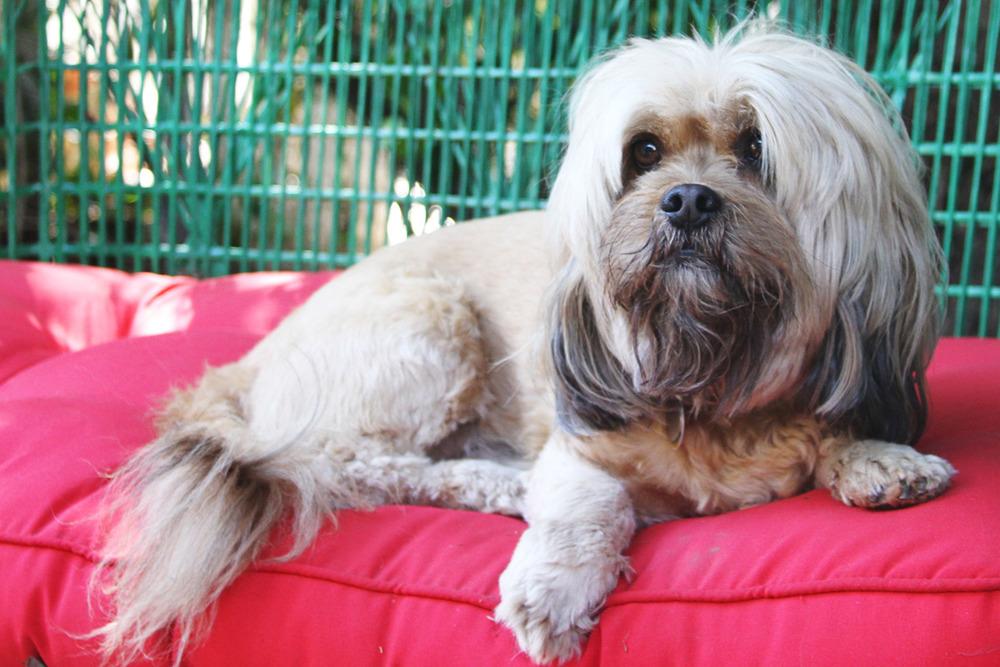 Bark-Williams-homepage-dog.jpg