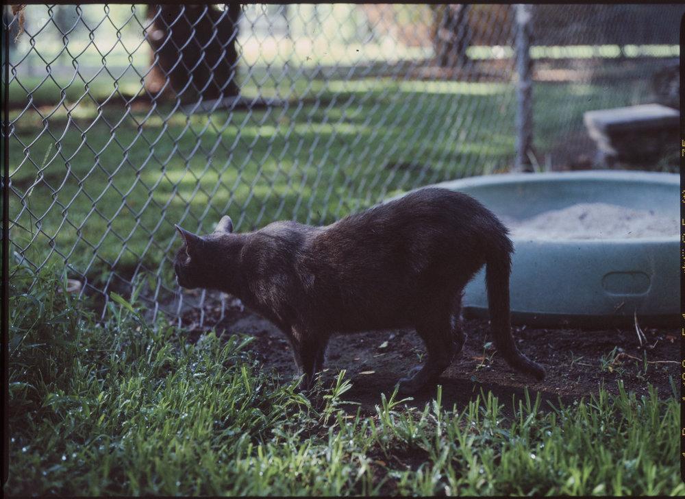 CATS_2 3.jpg