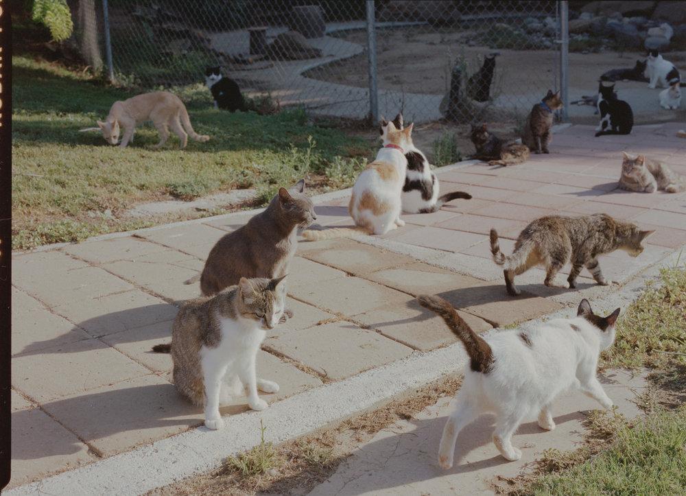 CatHouse_2906001 (2).jpg