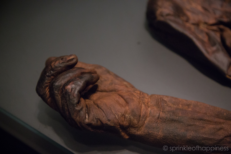National Archaeology Museum of Ireland: bog body hand