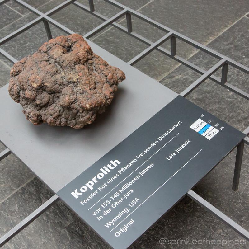 Dinosaur poo fossil