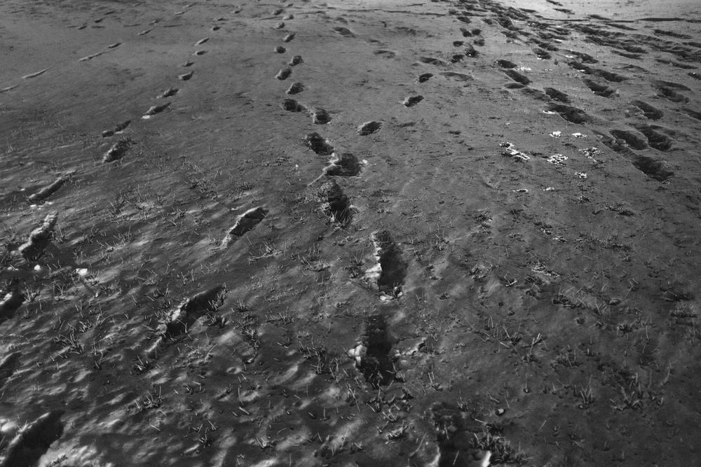snowprints.jpg