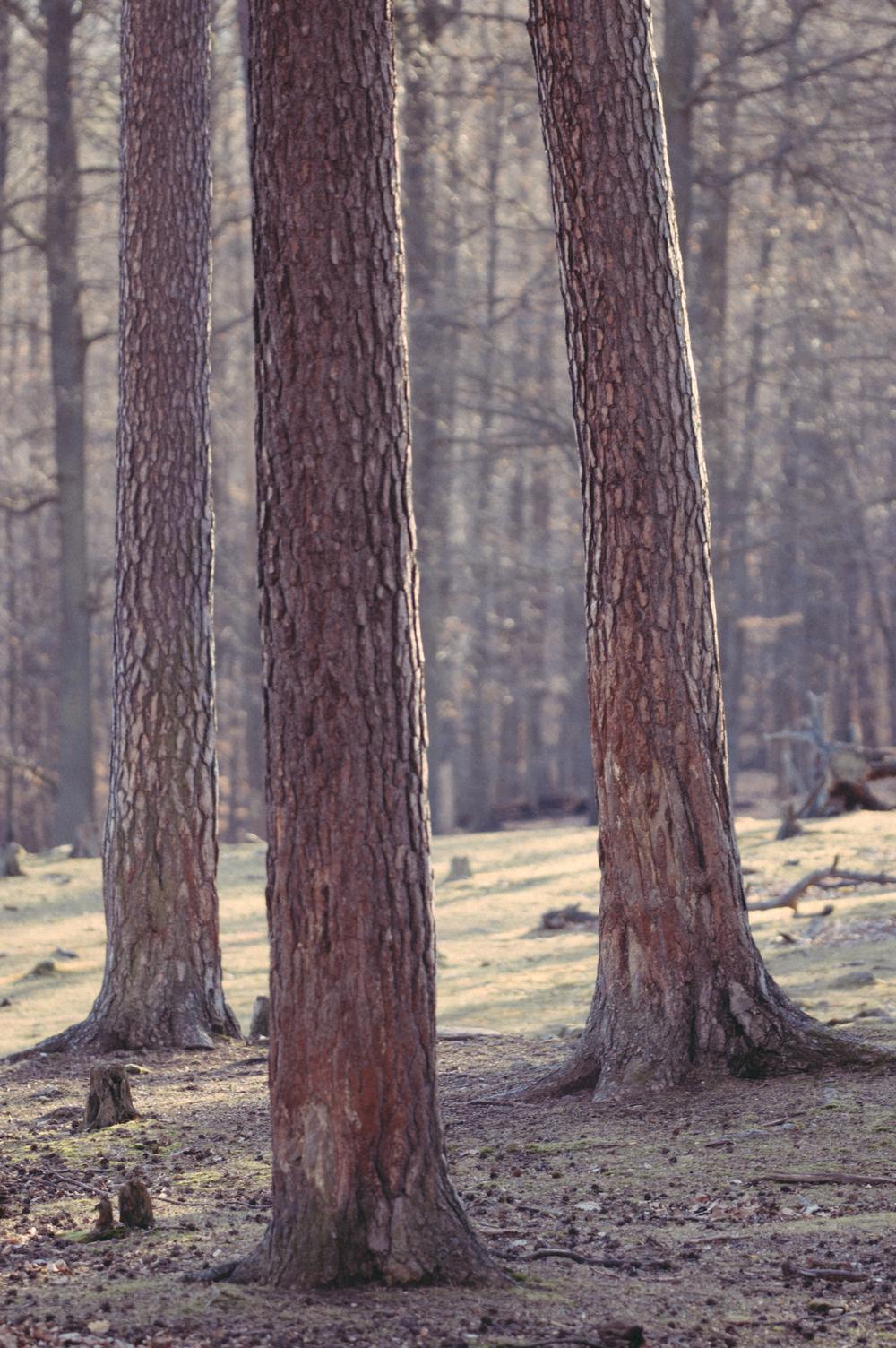 threetree.jpg