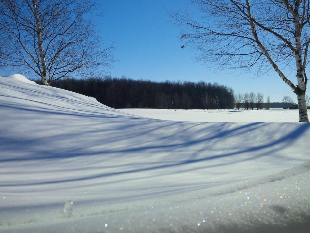 Winter Corn Field - Feb 2015.jpg