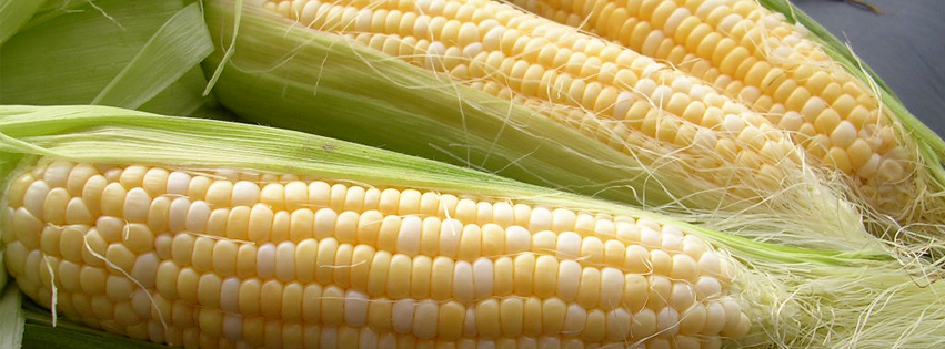 FB Cover Corn.jpg
