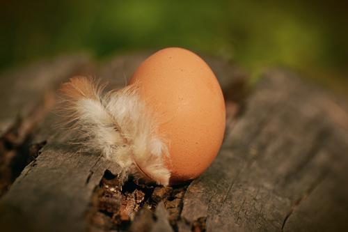 egg-1595940_960_720.jpg