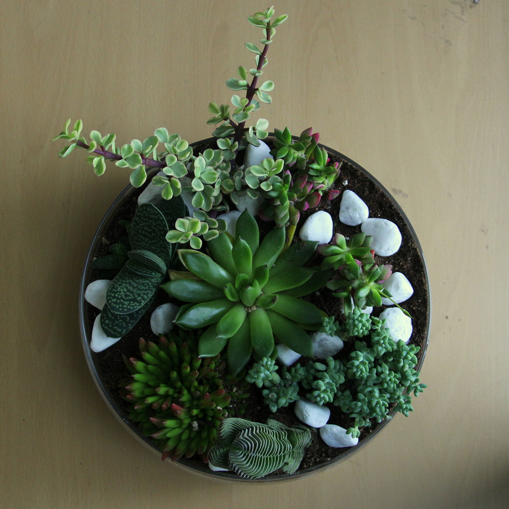 how to plant succulents