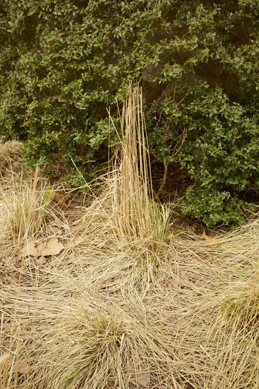 bushgrass.jpg