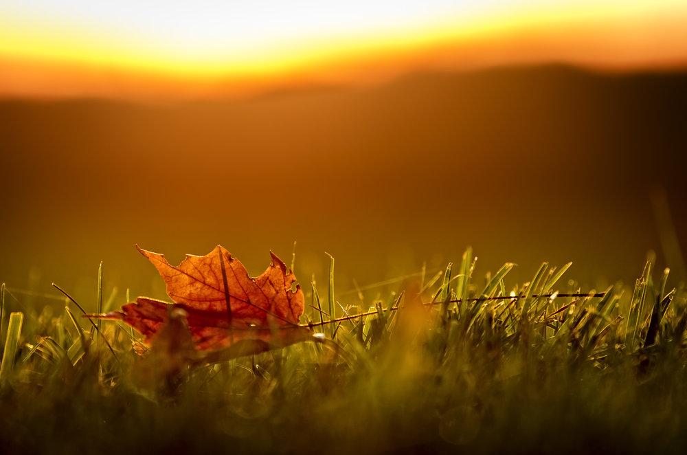 Fallen Leaf, Radiant Sky