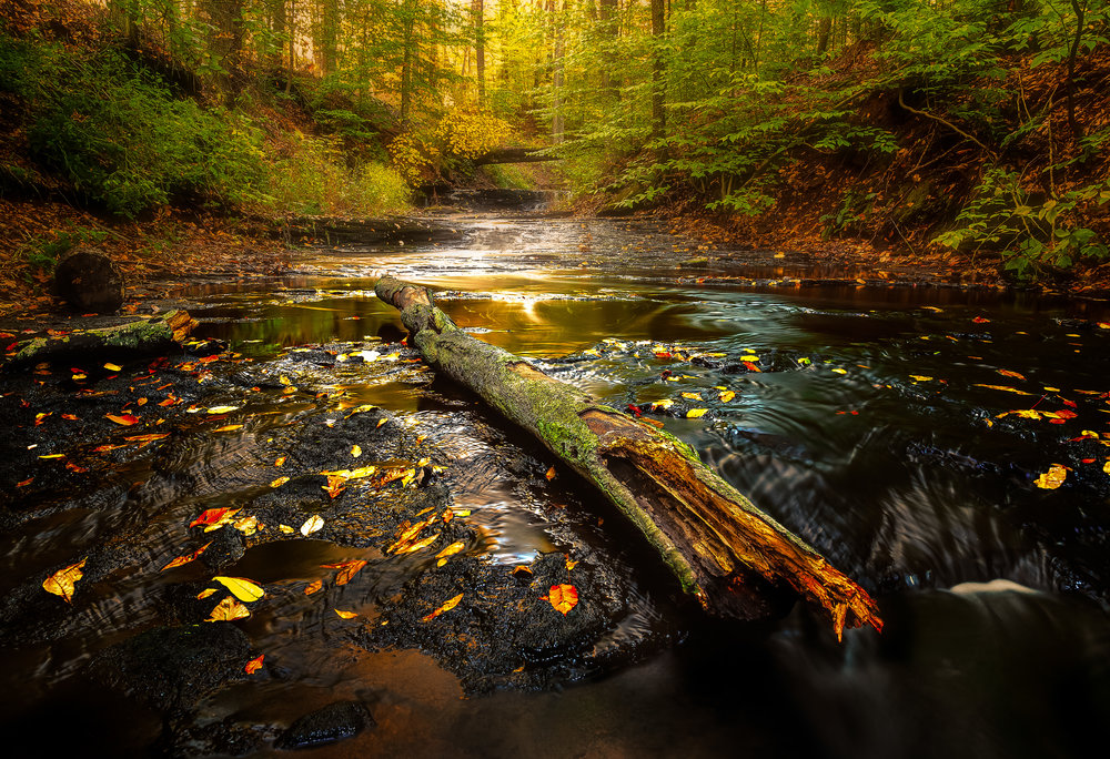 Wadsworth Autumn Series #2