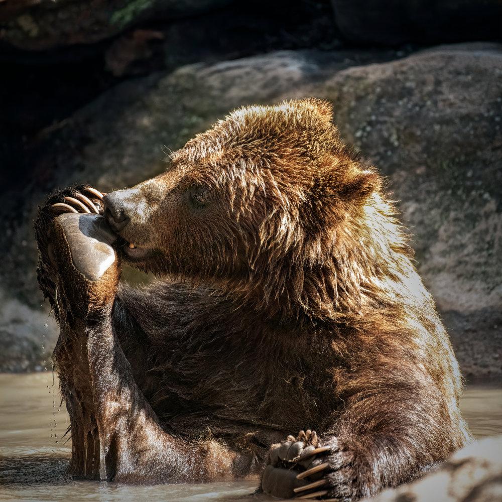 Balancing Bear Pose