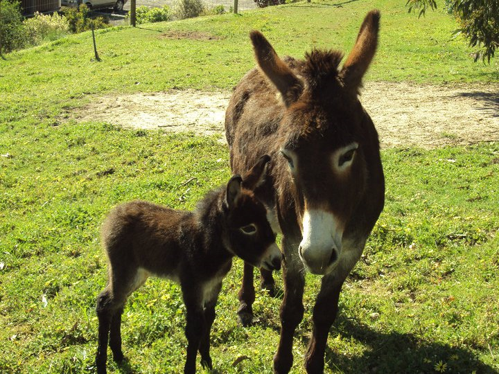 donkey - mom and baby.png