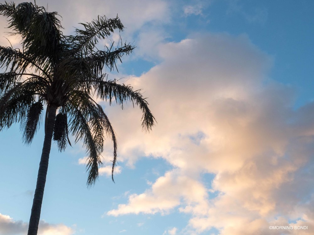 At sunrise from my place (yes, I live in paradise where there are palm trees and all that!!)