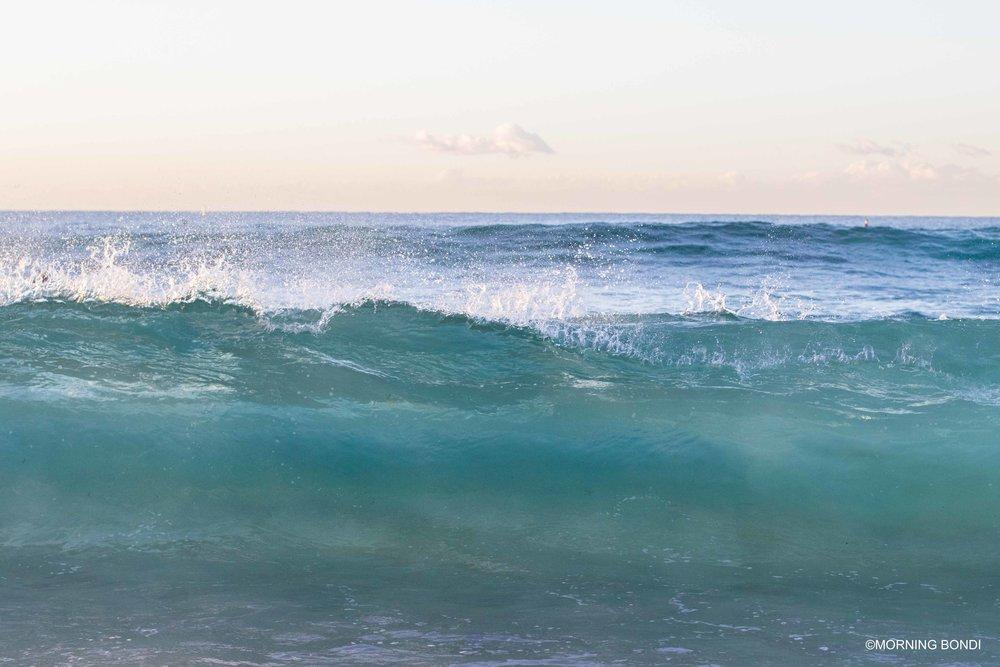 Shorey