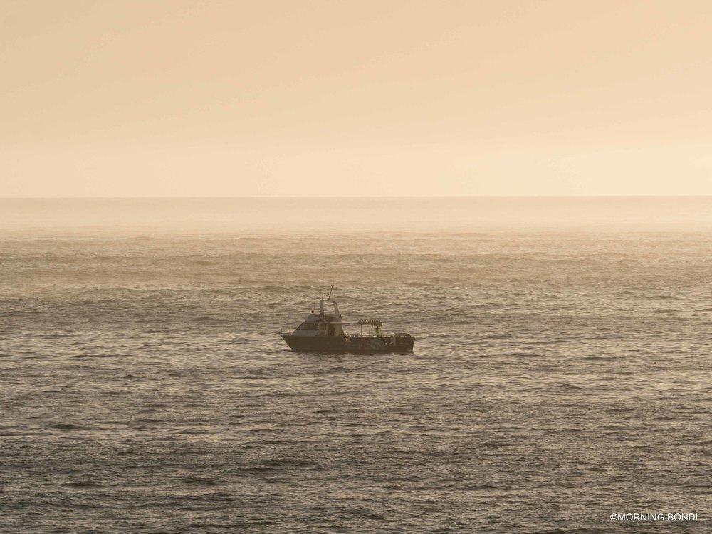 Shark net boat - so many sharks at the moment!
