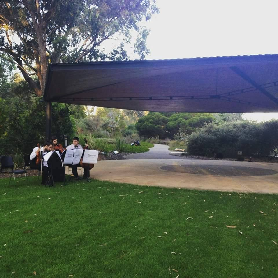 Ryan and Rosie Proposal 1 Hire Harpist String Quartet Wedding Music Perth www.RiversideEnsembles.com.au.jpg
