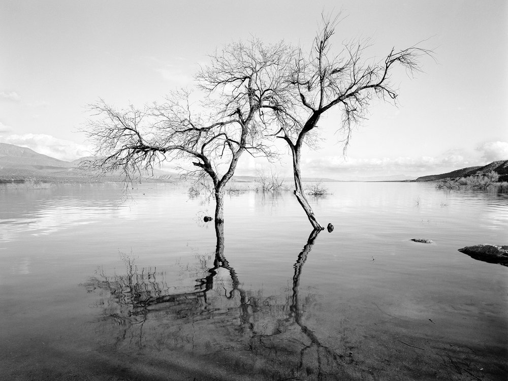Lavdovsky_Flooded Reservoir trees.jpg
