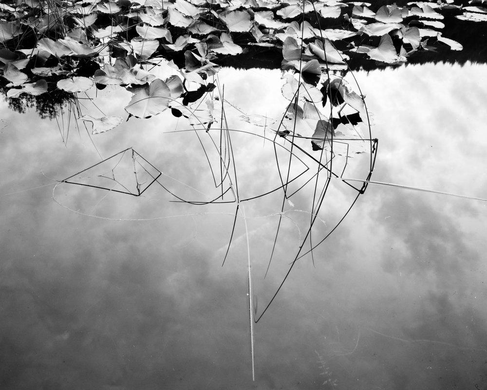 pond-reeds.jpg