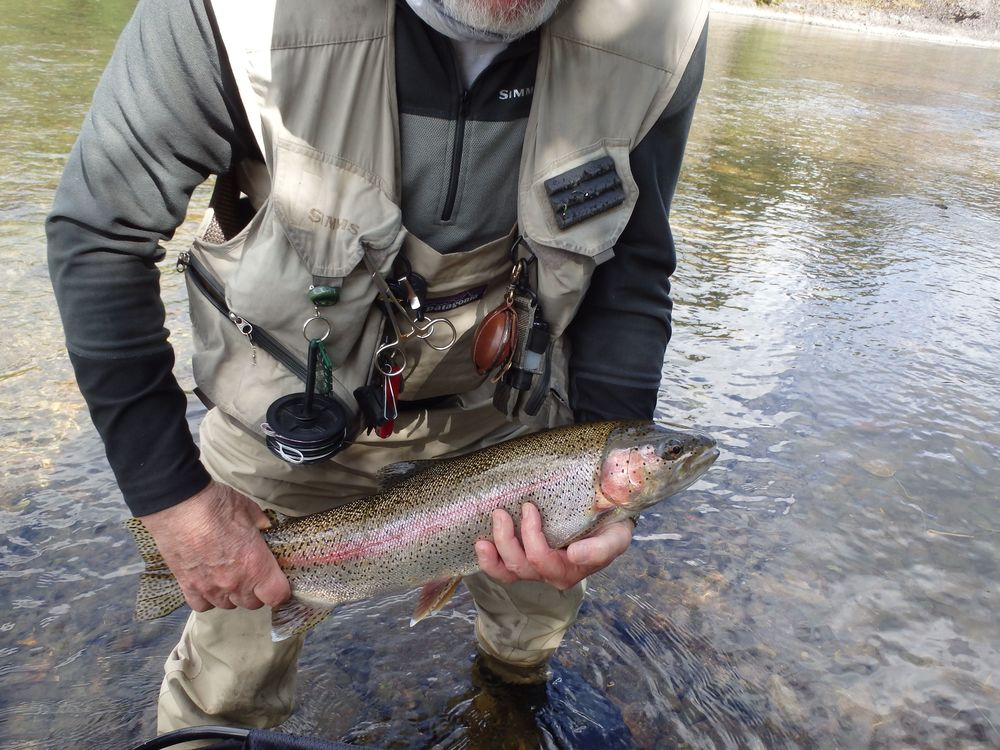 Copper River rainbow peter.jpg