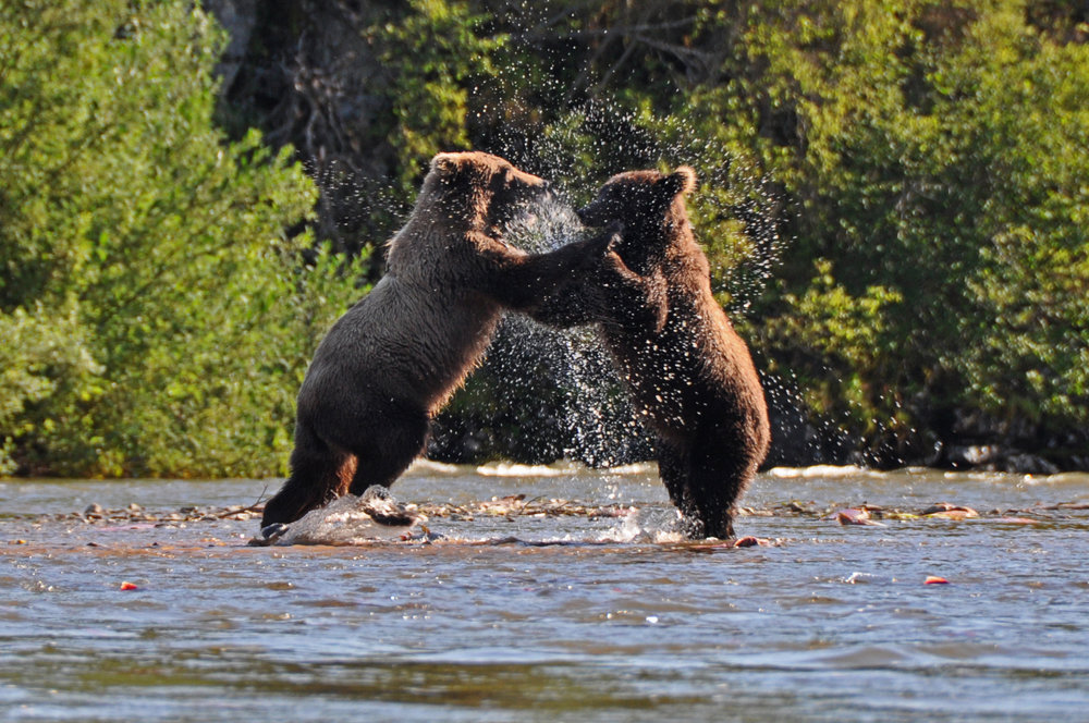CRL double bear.jpg