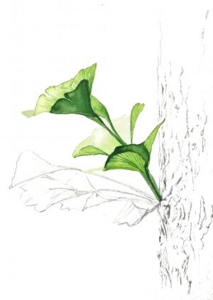 Ginkgo , watercolor and graphite on paper, by Jo Anne VC, 2018