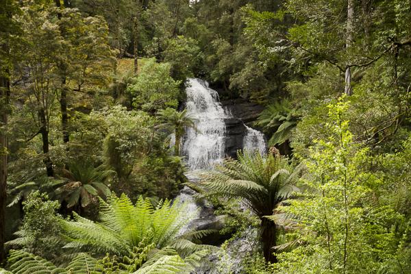 Triplet Falls Cape Otway National Park