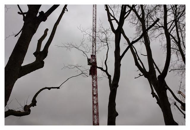 trees-crane.jpg