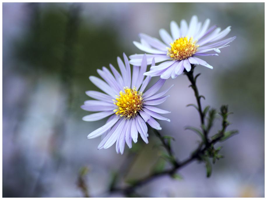 purple-flowers-mdow.jpg