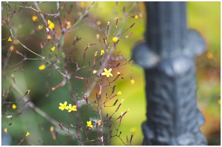 autumn-colours.jpg