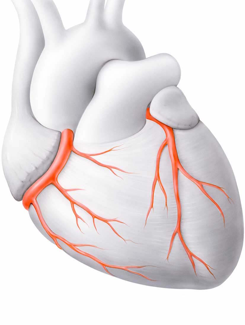 Herz Check Up - Herzklinik Hirslanden Zürich