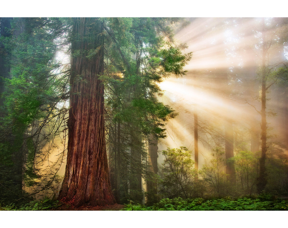 redwoodfograysmaster_0381.jpg