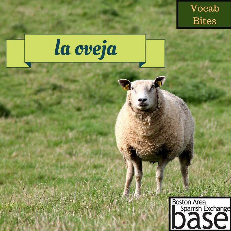 la oveja.png