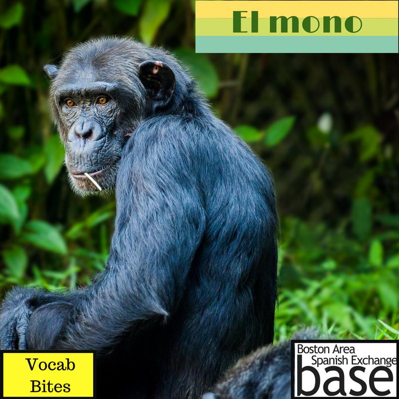 El mono.png