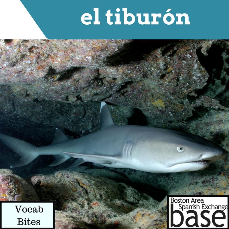 el tiburón.png