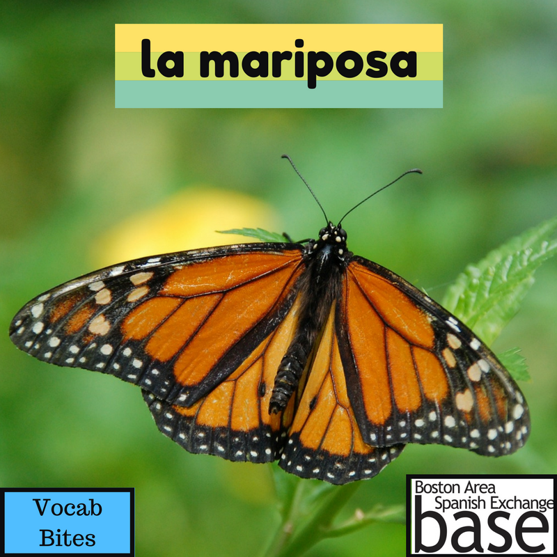 la mariposa.png