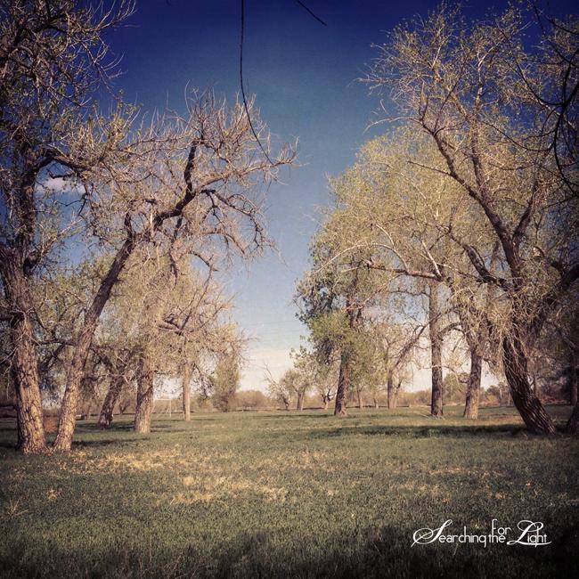 exploringthornton_10  | Denver Wedding Photographer | Denver Wedding Photographers | Denver  Photographer