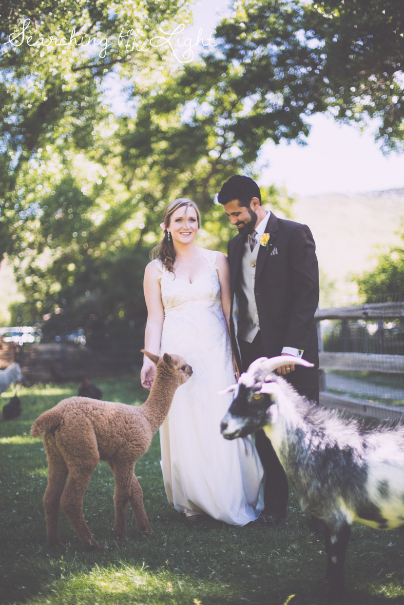 lyons farmette wedding photo, colorado wedding photographer, denver wedding photographer, farm animals