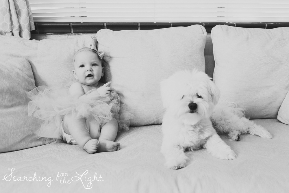 Colorado baby photographer photos of a five month old baby and a Maltese dog
