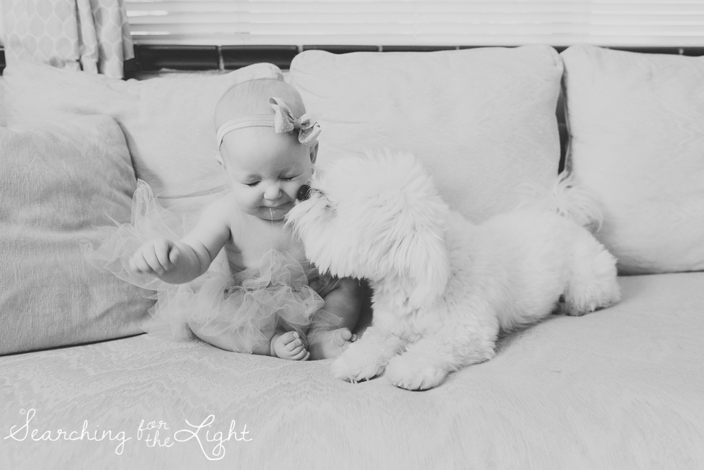 Colorado baby photographer photos of a five month old baby and a Maltese dog, cute baby and dog photo