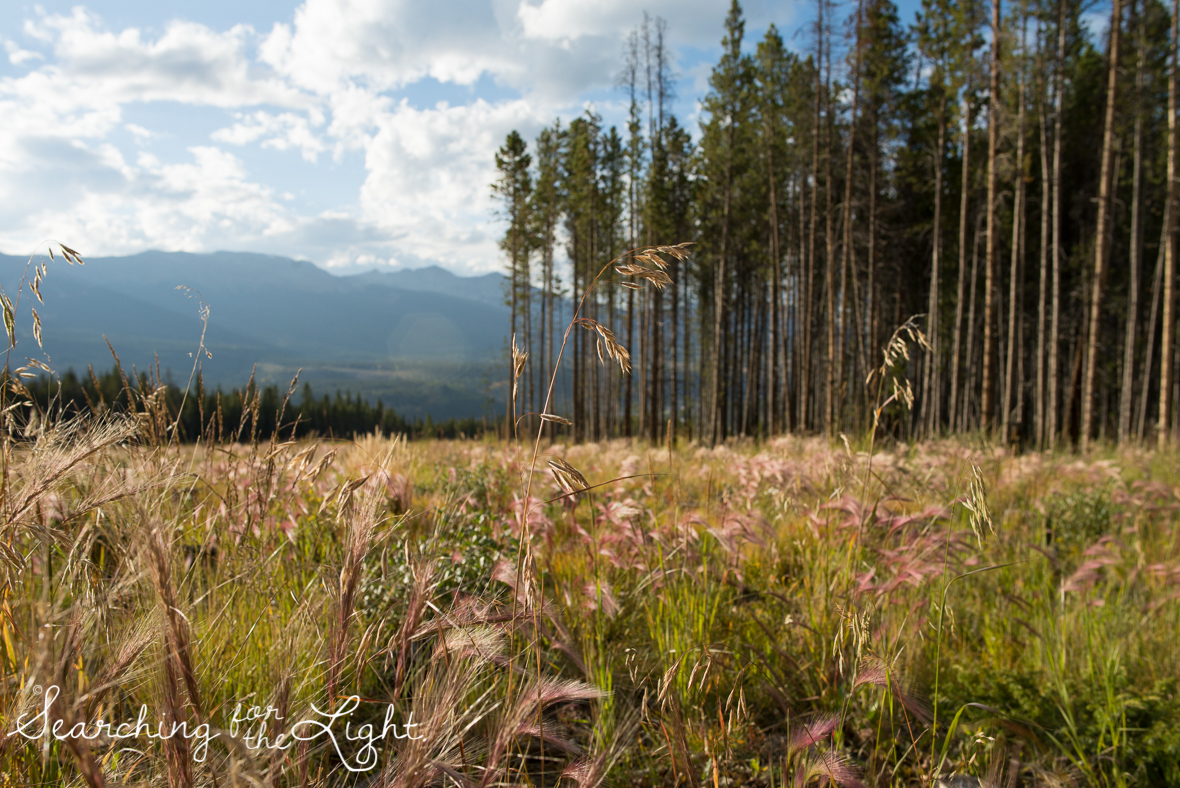 Colorado photographer, breckenridge photos in September