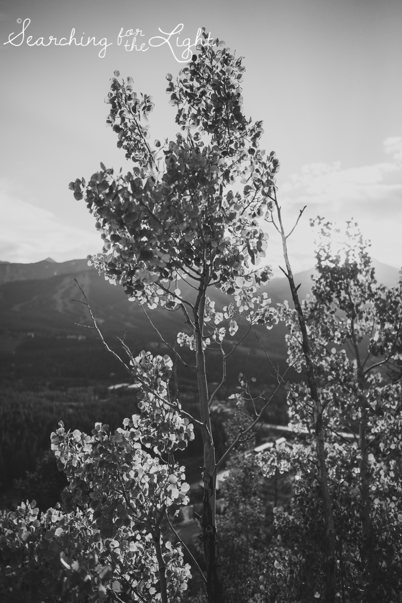 Colorado photographer, breckenridge photos in September, aspens