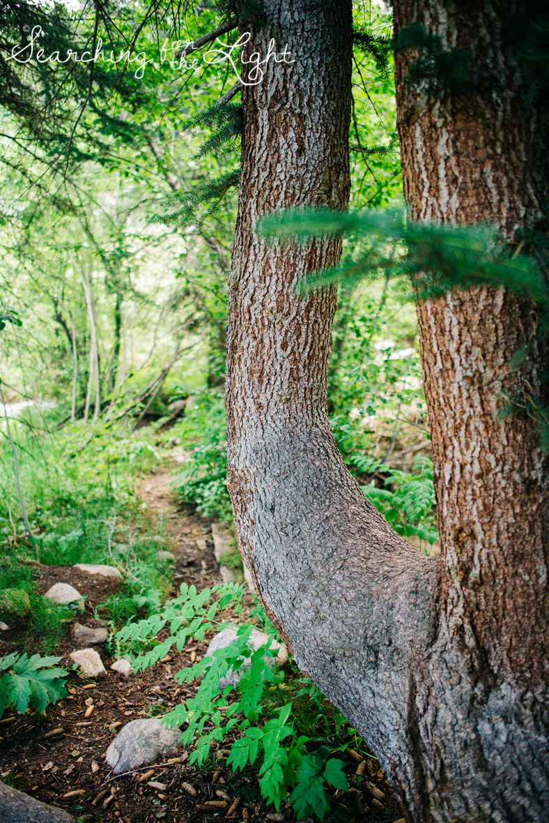 43vail_elopement_mountain_wedding_photos_marsha&louise_0008.jpg