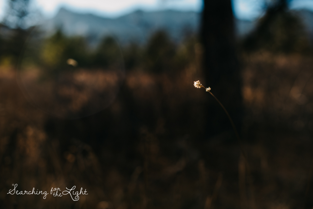 09mountain_wedding_photographer_boulder_engagement_photos_katie&ben_247.jpg