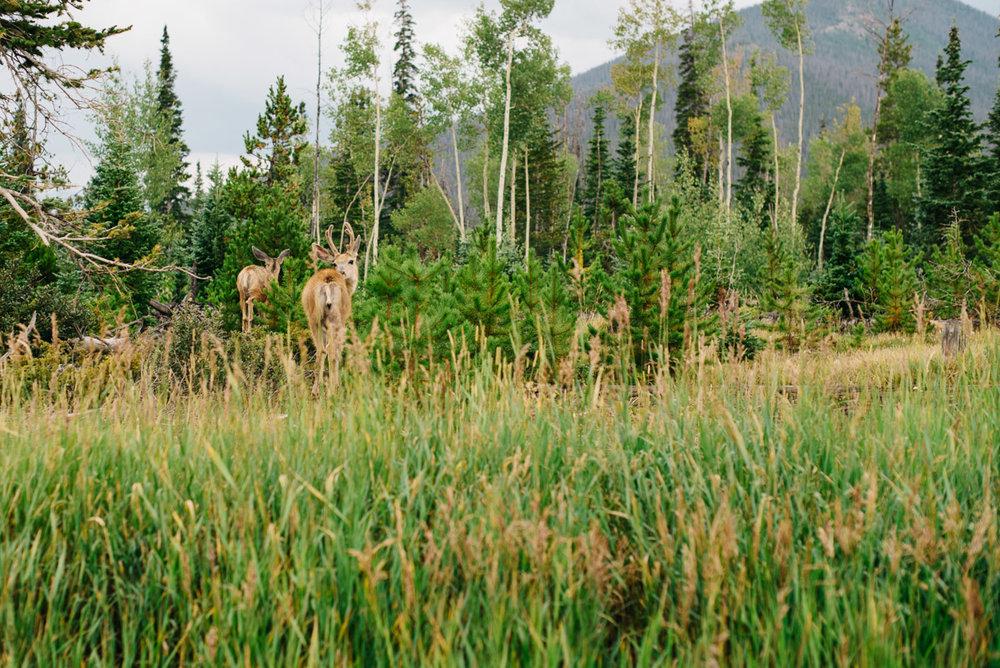 Destination Elopement Mountain Colorado Photographer {Cynthia & Chris Winter Park Snow Mountain Ranch, Colorado Elopement Wedding Photos | Adventurous Elopement Photographer}